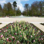 Programy do projektowania ogrodów online - czy warto z nich korzystać?
