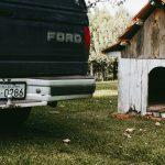 Buda dla psa pilnującego domu - jak ją zbudować?